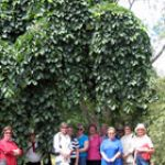 Tour Groups in the Ballarat Botanical Gardens