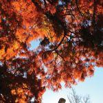 Ballarat Botanical Gardens © Andrew Thomas Photographer