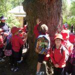 Primary School Day mini walks